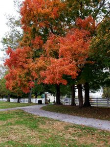 Mercer County KY Shakertown